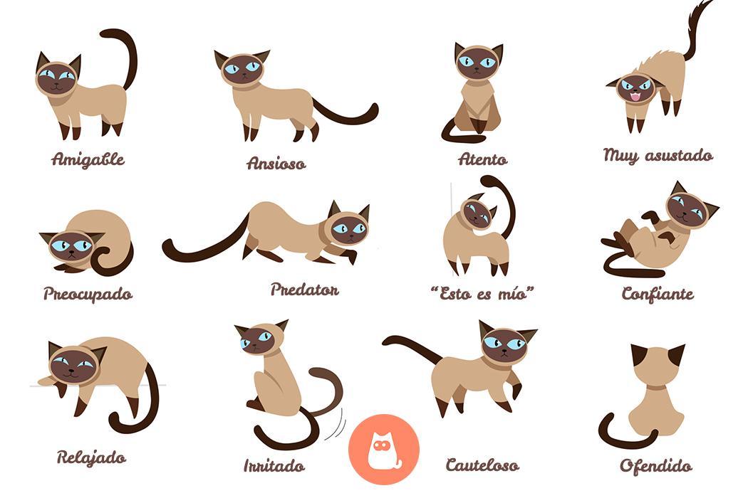En este momento estás viendo Posturas gatos significado